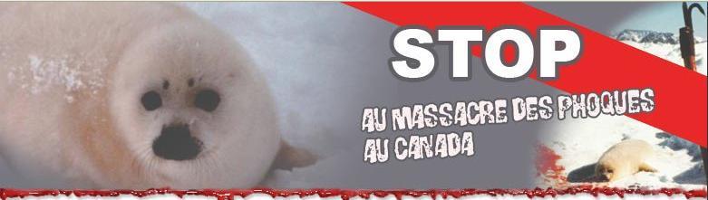 STOP A LA CHASSE AUX PHOQUES
