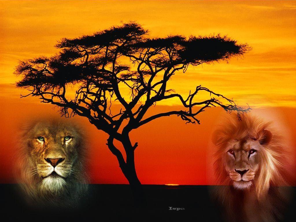 Savane afrique paysage savane animaux - Animaux savane africaine ...