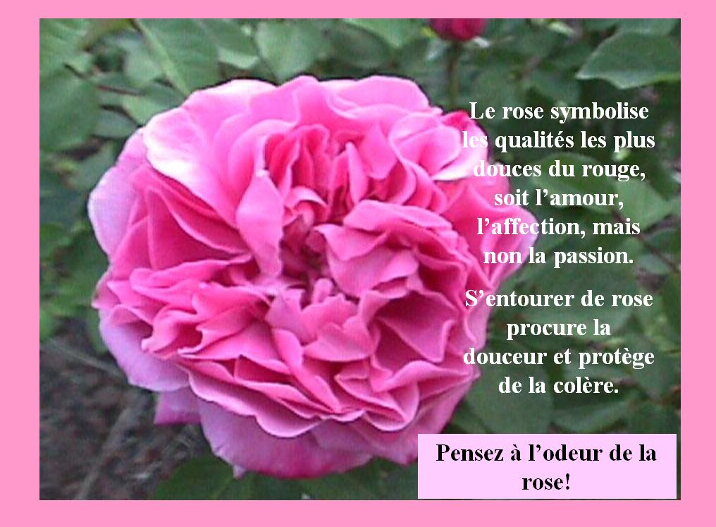 ROSE comme....